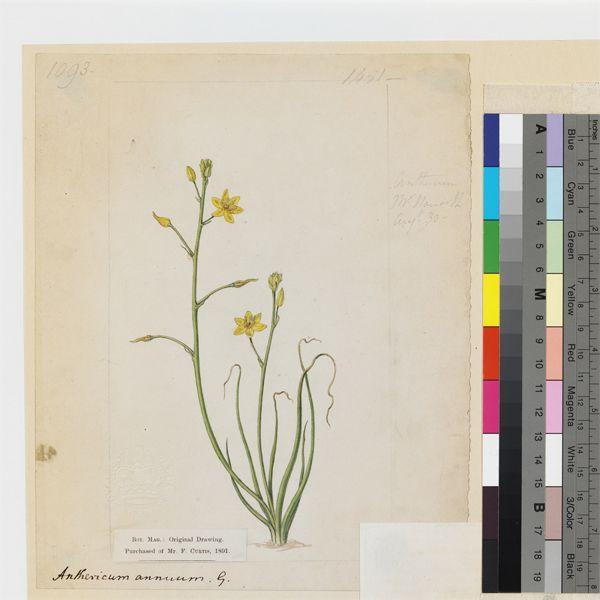 love wallpaper variation in plants
